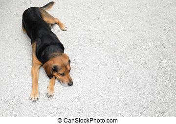 One tired dog lying down alone on light gravel