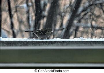 One titmouse bird (Paries)