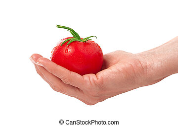 one tomato in hand isolated on white background