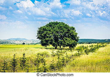 one tree and grass field