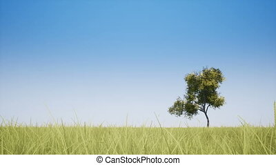 One tree and grass on the field