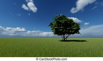 One Tree in a Green Meadow