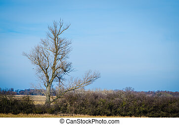 one tree in countryside