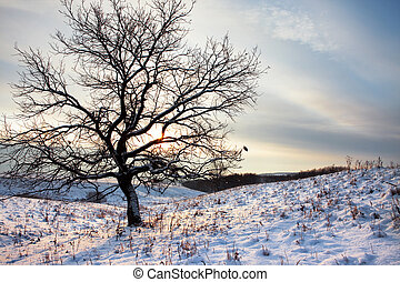 one tree in winter morning