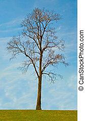 One tree on blue sky background