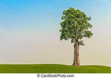 tree on grass field