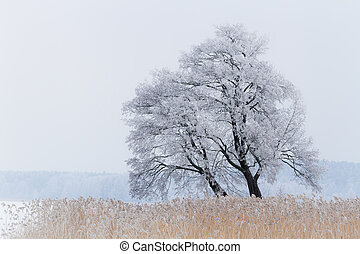 One tree on the snow-covered lake