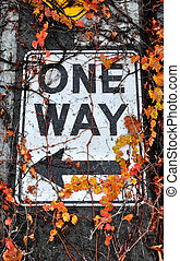One Way Sign on Alaskan Way Viaduct Concrete Support, Covered in the leaves and Vines of Climbing Plant