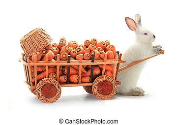 white rabbits  - one white rabbits vnut carrots