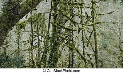 ongelofelijk, bind., bomen, mos, bedekt, elfje