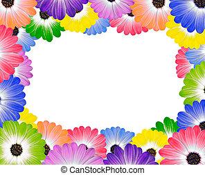 ongeveer, kleurrijke, frame, rand, madeliefje, bloemen
