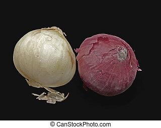 Onion, Allium cepa