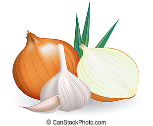Onion and garlic. Vector illustration on white background.