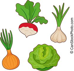 Onion, cabbage, garlic, radish - Set of healthy vegetables....