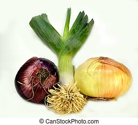 Onion family - Red onion, leek and a yellow onion on a white...