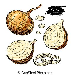 Onion hand drawn vector set. Full, rings and Half cutout slice. Isolated Vegetable artistic style object. Detailed vegetarian food drawing. Farm market product. Great for menu, label, icon