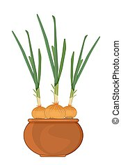 Onion in pot isolated on white background. - Cultivation of ...