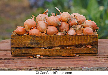 Onion in wooden box