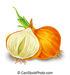 Onion isolated on white - Vegetable organic food onion cut...