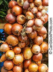 Onion - onion