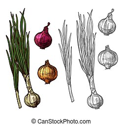 Onion or scallion vegetable with green leaf sketch - Onion...