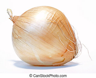 onion - an onion