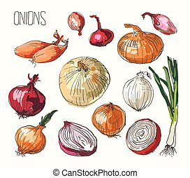 Onion set, vector illustration - vector illustration of...