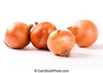 Onion - SONY DSC