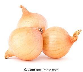 Onion vegetable bulbs - Onion vegetable bulbs on white...