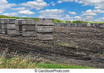 onions in crates in muck field