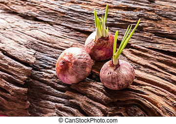 Onions, Red onions with small leaves on old weathered...