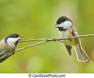 ontario , πουλί