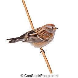 Ontario, Aves