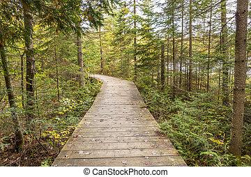 ontario, conífero, por, -, primero, bosque, canadá, boardwalk