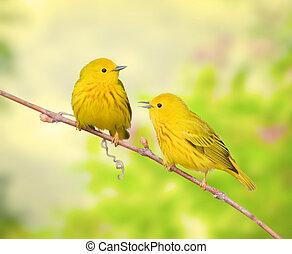 ontario, oiseaux