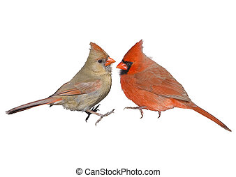 ontario, vogels