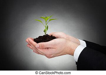 ontwikkeling, zakenman, sapling, het vertegenwoordigen, vasthouden
