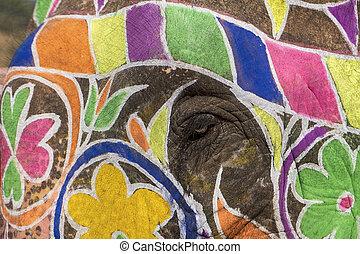 oog, elefant
