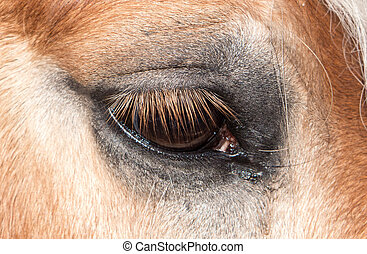 oog, van, paarde