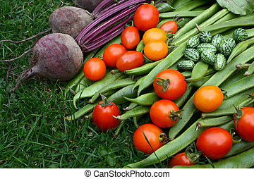 oogsten, groentes, toewijzing