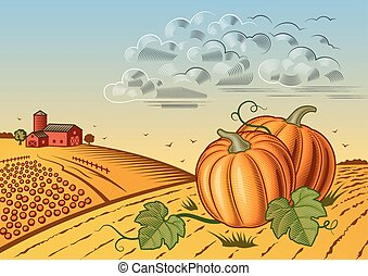 oogsten, landscape, pompoen