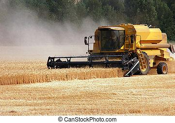 oogsten, tarwe