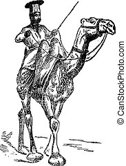 oont-wallah, engraving., (the, camel), vendange