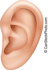 oor, menselijk, illustratie, vrijstaand