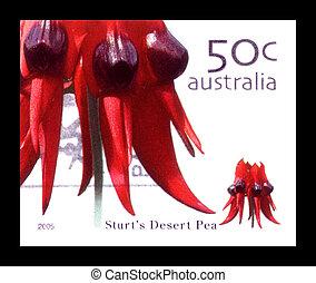 opłata pocztowa, australia, tłoczyć, sturts, -, pustynia, opisywanie, kwiat, :, 2005, odwołany, australijski, circa, groch, czerwony