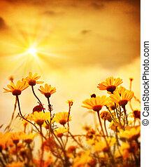 op, bloemen, ondergaande zon , warme