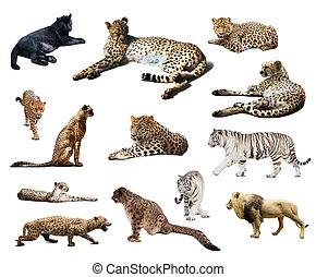 op, cheetah, vrijstaand, set, anderen, wildcats., witte