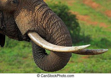 op einde, elefant