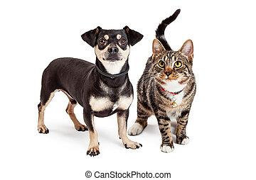 op het staan, dog, samen, kat, het kijken
