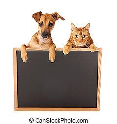op, leeg, dog, kat, meldingsbord